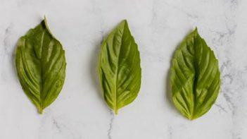 three basil leaves