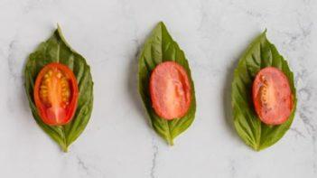 tomato slice on top of basil leaves